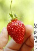 Купить «Strawberry.», фото № 28754667, снято 1 июня 2018 г. (c) easy Fotostock / Фотобанк Лори