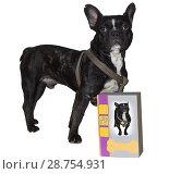 Купить «French bulldog proudly advertises dog food.», фото № 28754931, снято 31 декабря 2012 г. (c) easy Fotostock / Фотобанк Лори