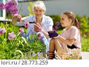 Купить «grandmother and girl planting flowers at garden», фото № 28773259, снято 3 июня 2018 г. (c) Syda Productions / Фотобанк Лори