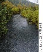 Купить «Salmon in Williwaw Creek. Near Whittier. Alaska. United States of America.», фото № 28778971, снято 22 сентября 2017 г. (c) age Fotostock / Фотобанк Лори