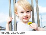 Купить «Маленькая девочка с цветком одуванчика смотрит сквозь решетку забора», фото № 28797219, снято 6 июня 2018 г. (c) Момотюк Сергей / Фотобанк Лори