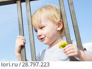 Купить «Маленькая девочка с цветком одуванчика смотрит сквозь решетку забора», фото № 28797223, снято 6 июня 2018 г. (c) Момотюк Сергей / Фотобанк Лори