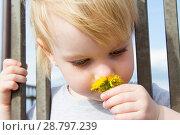 Купить «Маленькая девочка с цветком одуванчика смотрит сквозь решетку забора», фото № 28797239, снято 6 июня 2018 г. (c) Момотюк Сергей / Фотобанк Лори