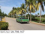 Green vintage American car rides along a row of tall palm trees (2018 год). Редакционное фото, фотограф Моисеев Дмитрий / Фотобанк Лори