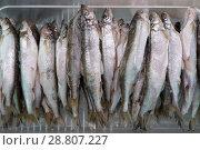 Купить «Мороженая рыба корюшка на прилавке рыбного магазина», фото № 28807227, снято 20 мая 2018 г. (c) А. А. Пирагис / Фотобанк Лори