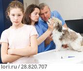 Купить «Worried girl with puppy visiting veterinarian clinic», фото № 28820707, снято 3 мая 2018 г. (c) Яков Филимонов / Фотобанк Лори