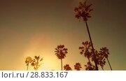 Купить «palm trees over sun shining in sky», видеоролик № 28833167, снято 8 июля 2018 г. (c) Syda Productions / Фотобанк Лори