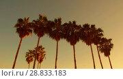 Купить «palm trees over sun shining in sky», видеоролик № 28833183, снято 8 июля 2018 г. (c) Syda Productions / Фотобанк Лори