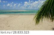 tropical beach with palm tree in french polynesia. Стоковое видео, видеограф Syda Productions / Фотобанк Лори
