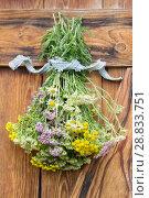 Букет из лекарственных трав. Стоковое фото, фотограф Альбина Ялунина / Фотобанк Лори