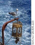 Купить «Средиземноморская чайка (лат. Larus michahellis) присела на судовой фонарь», фото № 28835223, снято 22 июня 2018 г. (c) Григорий Писоцкий / Фотобанк Лори