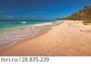 Купить «Sandy beach landscape. Caribbean Sea», фото № 28835239, снято 7 января 2017 г. (c) EugeneSergeev / Фотобанк Лори