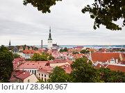 Купить «Вид на старый Таллин с церковью Святого Олафа (Олевисте) и черепичными крышами», фото № 28840967, снято 8 июля 2018 г. (c) Victoria Demidova / Фотобанк Лори