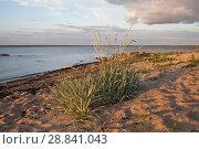 Купить «Побережье Балтийского моря в Эстонии на закате в солнечный день», фото № 28841043, снято 6 июля 2018 г. (c) Victoria Demidova / Фотобанк Лори