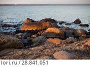 Купить «Побережье Балтийского моря в Эстонии на закате в солнечный день», фото № 28841051, снято 6 июля 2018 г. (c) Victoria Demidova / Фотобанк Лори