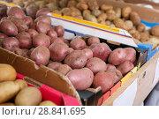 Купить «Potatoes in carton boxes in greengrocery», фото № 28841695, снято 16 июня 2018 г. (c) Яков Филимонов / Фотобанк Лори