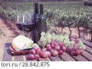 Купить «Red wine with cheese and grapes overlooking vineyard», фото № 28842875, снято 19 августа 2018 г. (c) Яков Филимонов / Фотобанк Лори