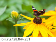 Summer butterfly and yellow flower on blurred background. Стоковое фото, фотограф Игорь Овсянников / Фотобанк Лори