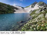 Купить «Цветущие рододендроны на берегу горного озера в горах Кавказа», фото № 28868299, снято 1 июля 2018 г. (c) Яна Королёва / Фотобанк Лори