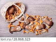 Купить «Белые грибы и лисички лежат рядом с корзиной на деревянном столе», фото № 28868323, снято 29 июля 2018 г. (c) Яна Королёва / Фотобанк Лори
