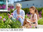 Купить «grandmother and girl study flowers at garden», фото № 28869959, снято 3 июня 2018 г. (c) Syda Productions / Фотобанк Лори