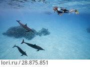 Купить «A woman in a mask and fins swim and look at the Spinner Dolphins (Stenella longirostris)», фото № 28875851, снято 1 августа 2018 г. (c) Некрасов Андрей / Фотобанк Лори
