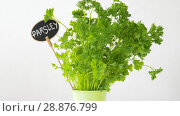 Купить «green parsley herb with name plate in pot on table», видеоролик № 28876799, снято 17 июля 2018 г. (c) Syda Productions / Фотобанк Лори