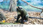 Купить «The large image of a small brown monkey), closeup», фото № 28907059, снято 23 июля 2018 г. (c) Владимир Журавлев / Фотобанк Лори
