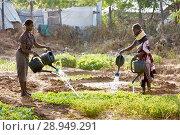 Купить «Kakuma, Kenya - Gardening in Kakuma refugee camp, managed and funded by GIZ / UNHCR.», фото № 28949291, снято 31 августа 2015 г. (c) Caro Photoagency / Фотобанк Лори