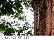 Купить «Hoppegarten, Germany, bee swarm», фото № 28951823, снято 9 июня 2017 г. (c) Caro Photoagency / Фотобанк Лори