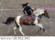Gestuet Ganschow, chart, trick riding in full gallop (2017 год). Редакционное фото, агентство Caro Photoagency / Фотобанк Лори
