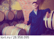 Купить «portrait of young male wine maker in coat working in winery cellaryoung wine maker in cellarman, male, young, working, winery, wine, cellar, wood, aging, standing, looking, expert, manufactory, uniform, bottler, equipment, section, alcohol, beverage, winemaking, professional, occupation, small, tank, processing, barrel, compartment, container, positive, european, caucasian, 20s, 30-35, portrait, examining, cheerful, glad, production, taste, factory, employed, showing, visiting, coveralls, unit, one, promoting, checking, coat, quality, control, craft, man, male, young,working, winery, wine, standing, cellar, wood, aging, looking, expert, manufactory, uniform, bottler, equipment, section, alcohol, bottle, beverage, winemaking, professional, occupation, processing, barrel, compartment, container, positive, caucasian, american, 30s, 25-29, expertise, smiling, producer, one, segment, label, selective, check-up, attentive, leaning,», фото № 28958095, снято 16 августа 2018 г. (c) Яков Филимонов / Фотобанк Лори