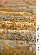 Купить «Old arabic tiles with lichen.», фото № 28960263, снято 10 мая 2018 г. (c) easy Fotostock / Фотобанк Лори