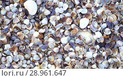 Купить «Close up lots of different mixed colorful seashells as background. Various corals, marine mollusk and scallop shells. Sea vacation travel and beach holiday tourism concept», видеоролик № 28961647, снято 15 августа 2018 г. (c) Happy Letters / Фотобанк Лори