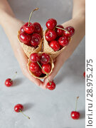Купить «Hands of a woman holding crispy wafer cups with large ripe cherry berries in them on a gray table.», фото № 28975275, снято 30 мая 2018 г. (c) Ярослав Данильченко / Фотобанк Лори