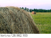 Large round bale of hay close up on a beveled meadow. Стоковое фото, фотограф Евгений Харитонов / Фотобанк Лори