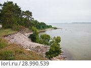 Побережье Балтийского моря в Эстонии. Стоковое фото, фотограф Victoria Demidova / Фотобанк Лори