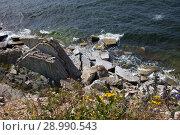 Купить «Глинт Палдиски, Полуостров Пакри, Эстония», фото № 28990543, снято 7 июля 2018 г. (c) Victoria Demidova / Фотобанк Лори