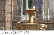 Купить «Seagulls on fountain about Church of Trinity in Porto, Portugal», видеоролик № 29011343, снято 12 апреля 2017 г. (c) BestPhotoStudio / Фотобанк Лори
