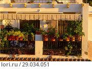Купить «Terrace decorated with plants typical of the Santa Cruz neighborhood of Alicante, Valencia, Spain», фото № 29034051, снято 23 декабря 2016 г. (c) age Fotostock / Фотобанк Лори