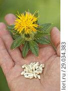 Купить «Safflower seeds. Carthamus tinctorius.», фото № 29034383, снято 21 июля 2018 г. (c) easy Fotostock / Фотобанк Лори