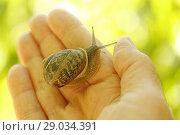 Купить «Showing a snail.», фото № 29034391, снято 15 июля 2018 г. (c) easy Fotostock / Фотобанк Лори