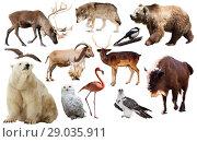 Купить «europe animals isolated», фото № 29035911, снято 20 марта 2019 г. (c) Яков Филимонов / Фотобанк Лори