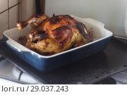 Купить «appetizing baked chicken with golden roasted crust cooked in the oven», фото № 29037243, снято 4 мая 2018 г. (c) Tetiana Chugunova / Фотобанк Лори