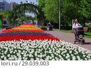 Купить «Тюльпаны в Бабушкинском парке, Москва», фото № 29039003, снято 14 мая 2018 г. (c) Natalya Sidorova / Фотобанк Лори