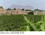 Купить «Agricultural fields in Algorfa village. Spain», фото № 29039375, снято 3 августа 2018 г. (c) Alexander Tihonovs / Фотобанк Лори