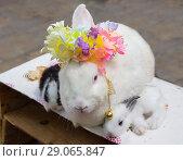 Купить «Кролик с крольчатами», фото № 29065847, снято 7 июня 2012 г. (c) Галина Савина / Фотобанк Лори