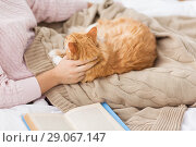 Купить «close up of owner stroking red cat in bed at home», фото № 29067147, снято 15 ноября 2017 г. (c) Syda Productions / Фотобанк Лори