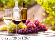 Купить «still life with glasses of red and white wine and grapes in field of vineyard», фото № 29071267, снято 19 октября 2018 г. (c) Татьяна Яцевич / Фотобанк Лори