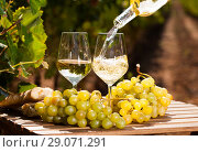 Купить «glass of White wine ripe grapes and bread on table in vineyard», фото № 29071291, снято 19 октября 2018 г. (c) Татьяна Яцевич / Фотобанк Лори
